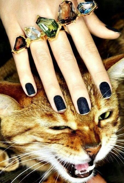 matte navy polish + kitty | Надо попробовать | Pinterest (57425)