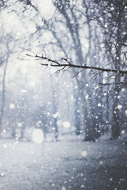 The snow is sometimes inspiring by kimberly | We Heart It (324404)