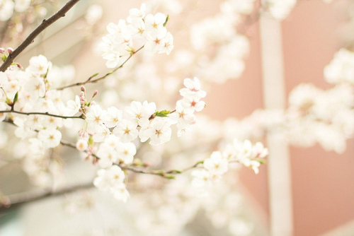 Blossom | via Tumbler by eleganthour | We Heart It (370390)