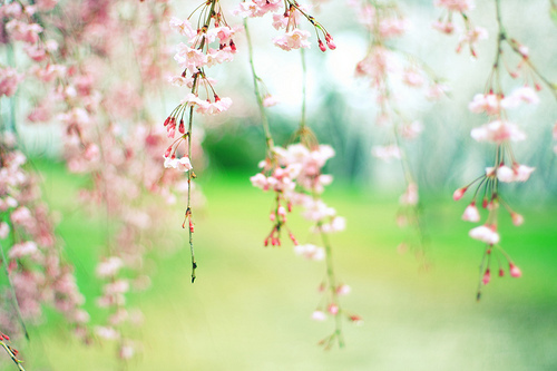 This pic just makes me smile I have it as my wallpaper by Tahmiz Ländin   We Heart It (400475)