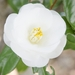 ふっくらした花びらがかわいい♡ブライダルにぴったりのカメリアネイル