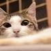 猫耳生やしてもっとキュートな指先に♪ネイルチップを使った猫耳ネイルがかわいい!