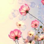 秋に咲くサクラ。秋は『コスモスネイル』で大人可愛く♡
