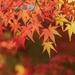 2016年「秋」に押さえておきたいネイルデザイン3選