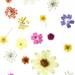 大人可愛い『押し花ネイル』特集♡オフィスOKなシンプルデザインも!