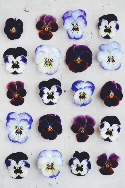 Pansy | We Heart It (97554)