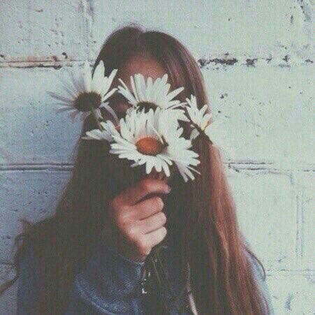 Daisies | We Heart It (104375)