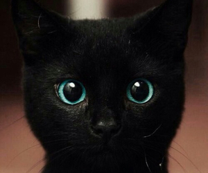 BlackCat | via Tumblr | We Heart It (105078)