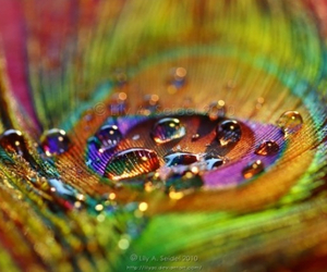 Dewdrops on a peacock feather  | We Heart It (105271)