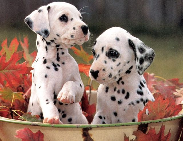 spotted | Cute ! | Pinterest (107958)