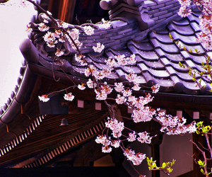 • japan japanese flower asian flowers architecture cherry blossom Asia temple kyoto cherry blossoms traditional tradition asian architecture kyoto prefecture traditional architecture princejossi •   We Heart It (110135)