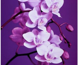 """Purple Orchid"" Canvas Art  