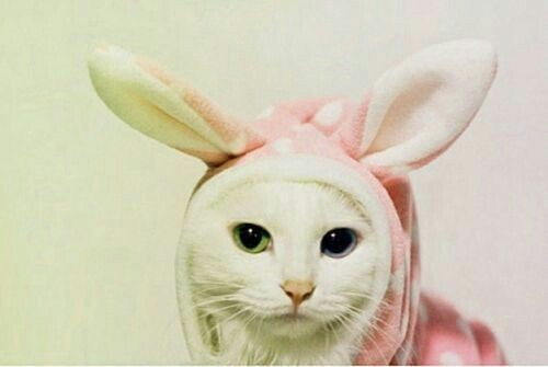 Hipster bunny | We Heart It (150413)