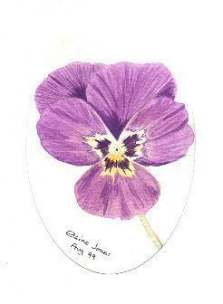 pansy sketch  | We Heart It (190124)