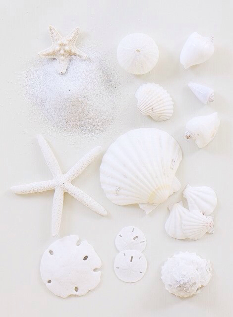 sea shells | We Heart It (207491)