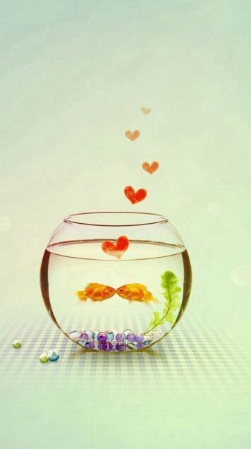 Couple of the goldfish  | We Heart It (231120)