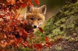秋色の魔法にかかった動物たちの、「小さい秋見つけた!」 : カラパイア (272266)
