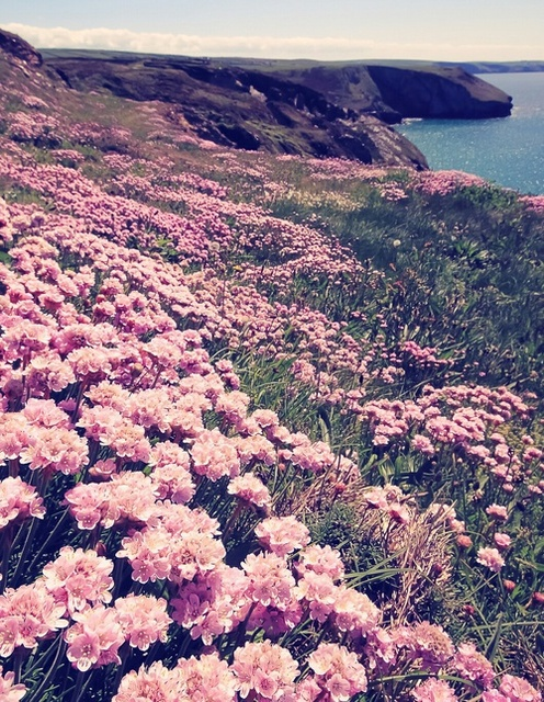 spring by Dreamer | We Heart It (376216)