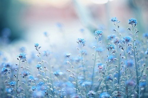 """laceandflora: """"Live in the sunshine. Swim the sea. Drink the wild air."""" ― Ralph Waldo Emerson by Heartss ♡ ∞ ♡ Soulss 