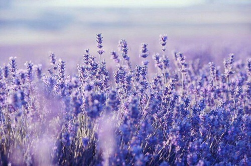 Purple ❤ by NicoleAntu | We Heart It (390983)