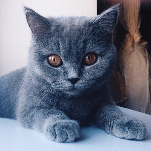 ♡ Trop chou ....... by WAYVEE | We Heart It (393005)