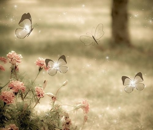 Butterflies, and flowers in a meadow by VoyageVisuelle ✿⊱╮ by VoyageVisuelle ✿⊱╮ | We Heart It (427596)