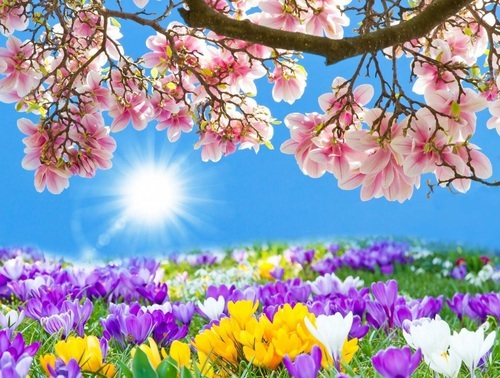 ♥Spring Blossom♥ by tiger family | We Heart It (430766)
