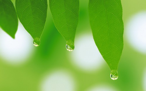 General 2560x1600 leaves water drops by Jacob Share | We Heart It (450983)