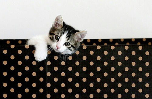 Kitten by Ilke Van Branteghem | We Heart It (460063)