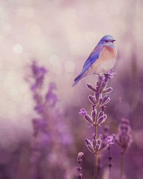 blue bird by Saya Naito | We Heart It (465866)