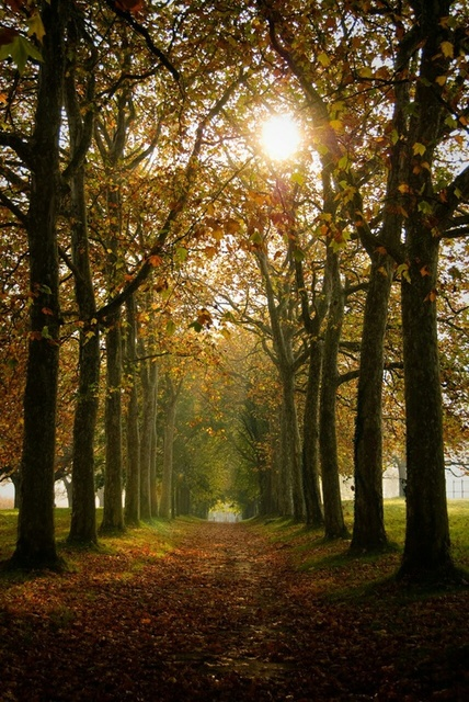 Autumn by Coffee_Addict | We Heart It (474077)